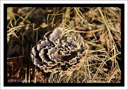 Prachtige paddenstoel(?)