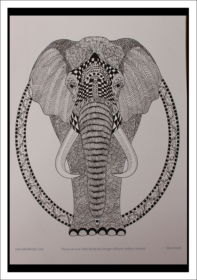 Zentangle – Olifant