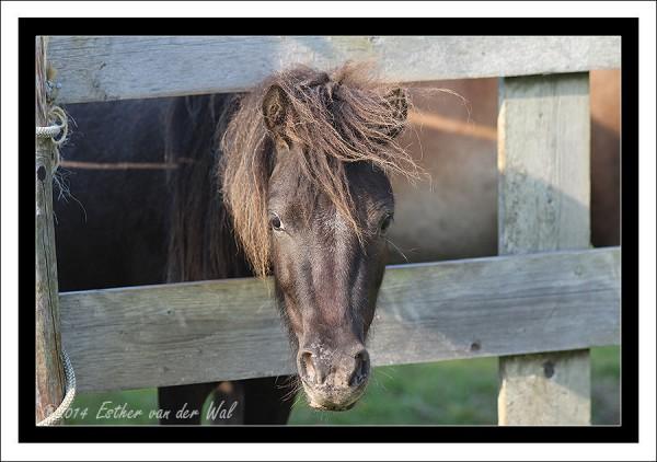 paardje-01
