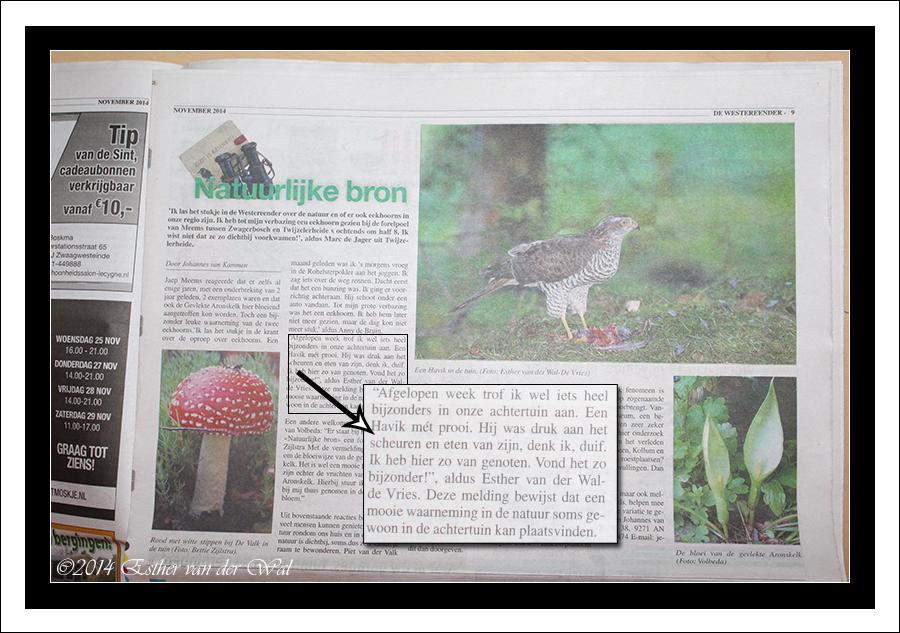 Foto in de krant