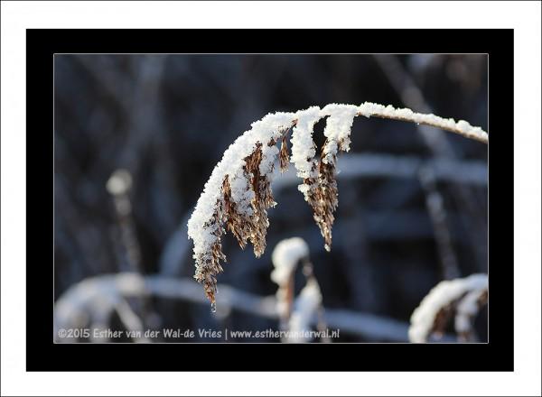 Sneeuw-2015-015