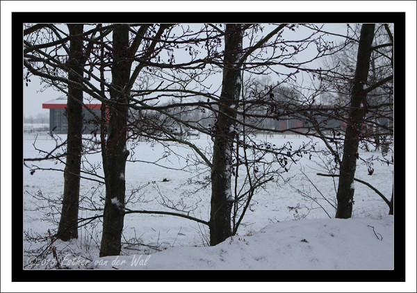 Sneeuw-23-01-2015-03