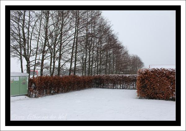 Sneeuw-23-01-2015-04