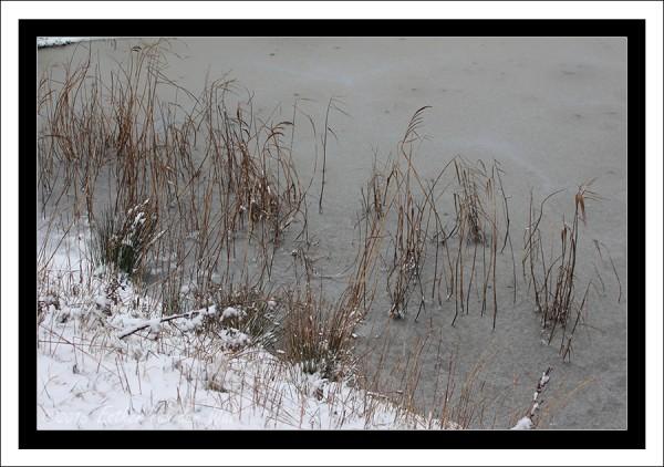 Sneeuw-23-01-2015-08