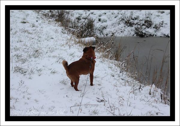 Sneeuw-23-01-2015-09
