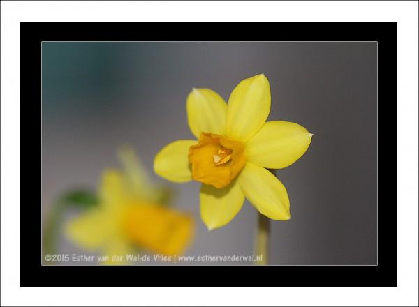 Narcis-02