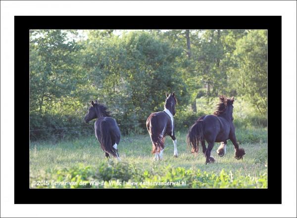 Paarden-01
