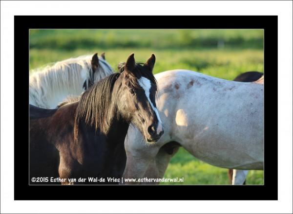 Paarden-02