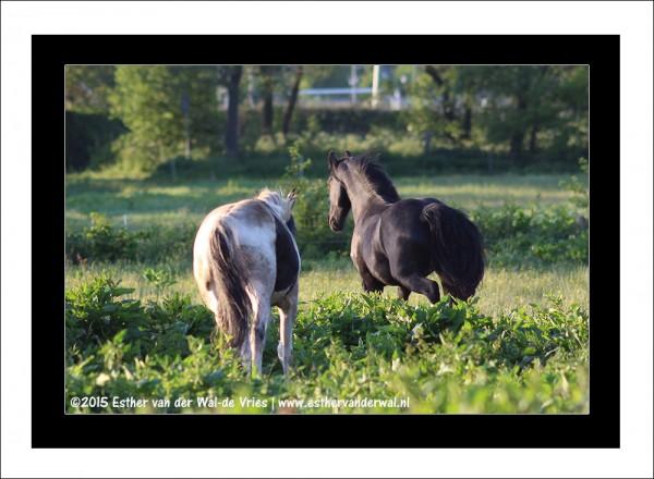 Paarden-04