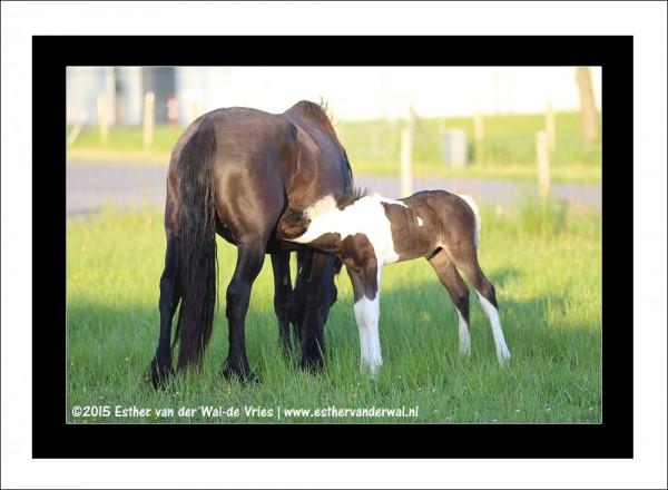 Paarden-06