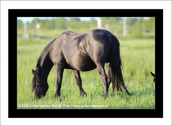 Paarden-08