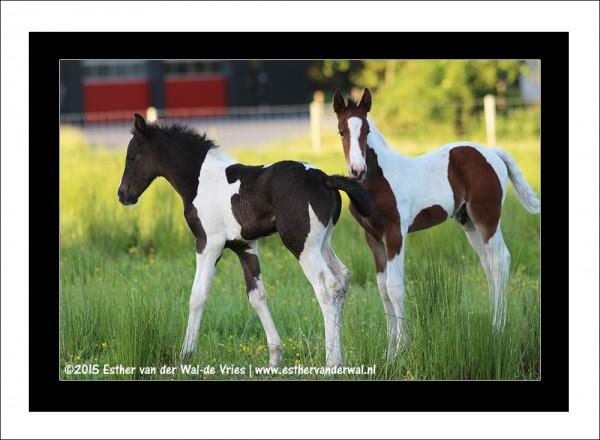 Paarden-09