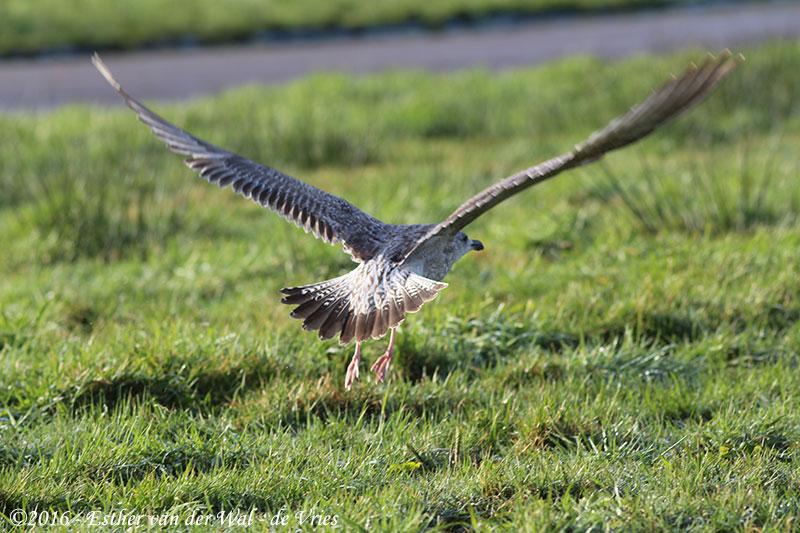 Vogels-23012016-006