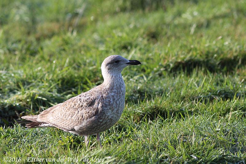 Vogels-23012016-010