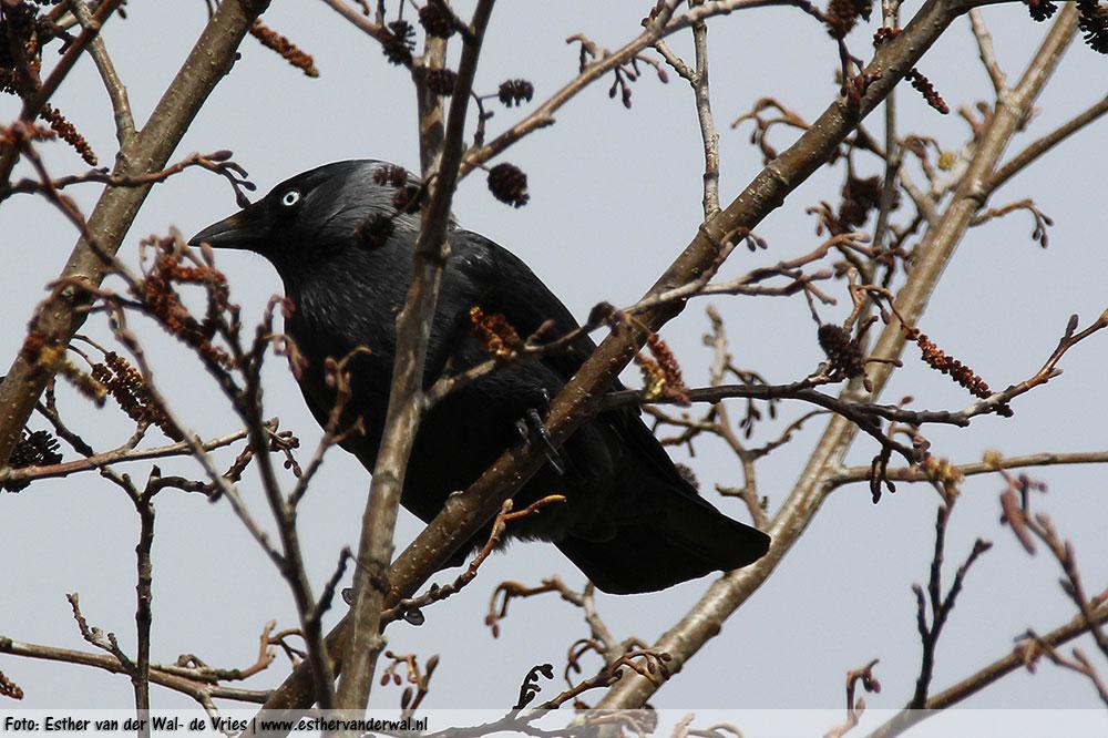 Meer Vogels