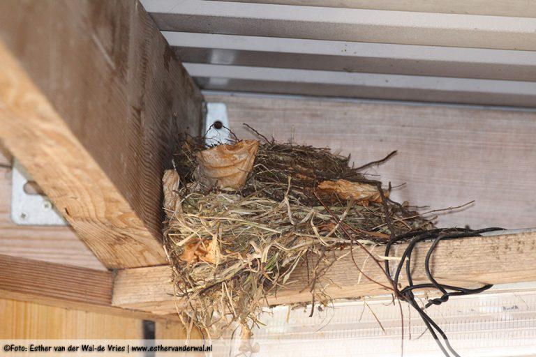 Alweer een nestje onder de carport, vorig jaar zat daar een duivennest. Ben benieuwd wat dit is.