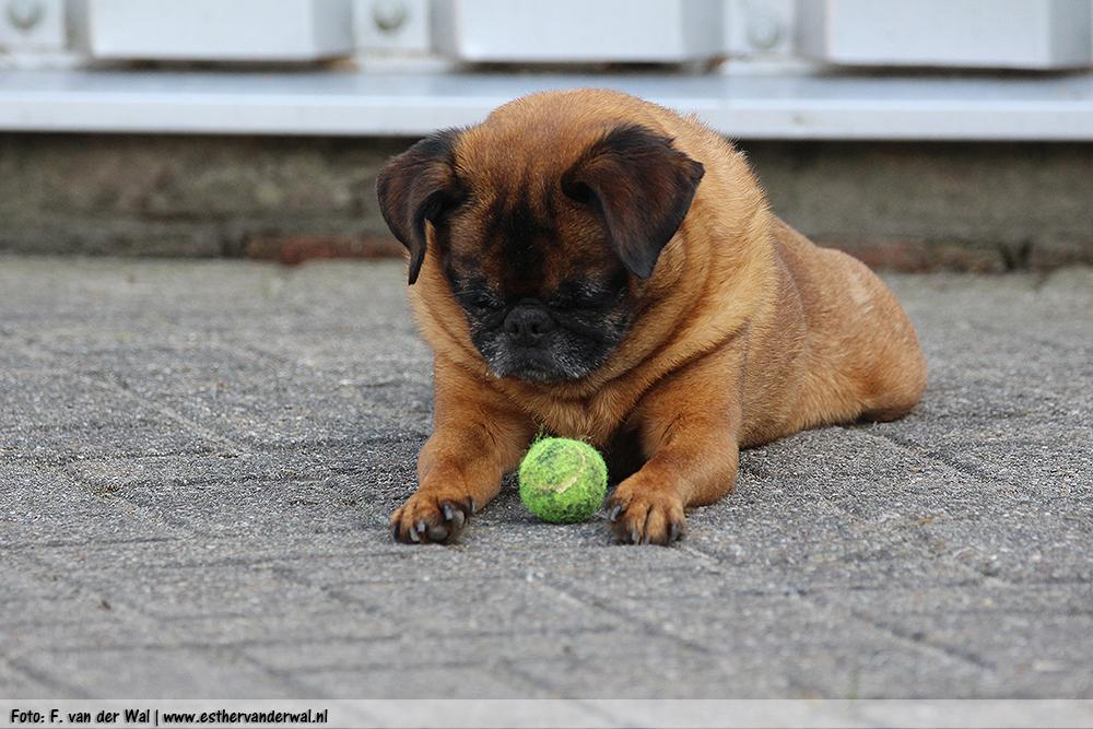 Boris & zijn bal