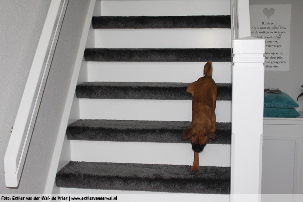 En... ik kan van de trap! Oplopen kon ik al een tijdje maar ik kan nu ook zelf naar beneden!
